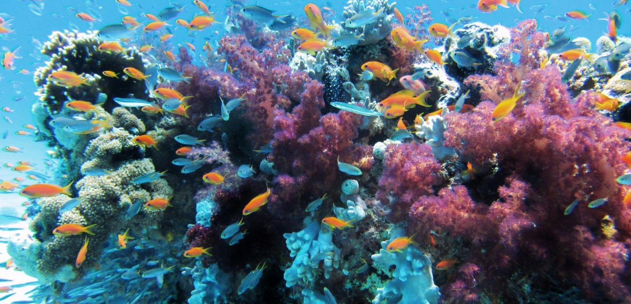 Fische & Korallen
